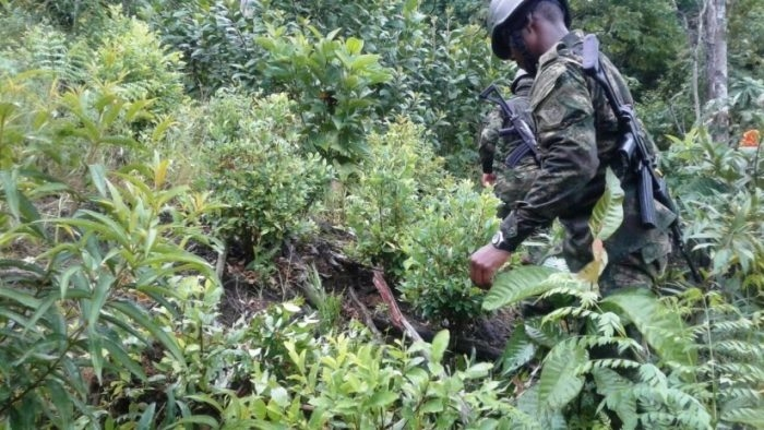 Hallan avioneta enterrada en zona selvática del sur de Bolívar