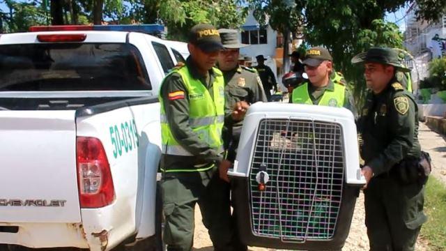 En Cartagena rescatan más de 200 aves que eran mantenidas en cautiverio.