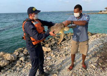 Retornan a su hábitat más de 800 especies de fauna protegida